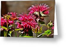 Breakfast At The Bee Balm Greeting Card