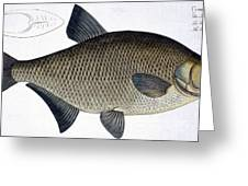 Bream Greeting Card