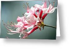 Breathtaking Beauty Greeting Card