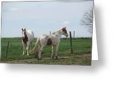 Breed Horses Greeting Card