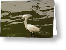 Breeding Egret Greeting Card