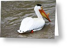 Breeding Plumage Greeting Card