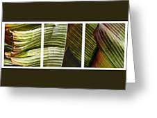 Breeze - Banana Leaf Triptych Greeting Card