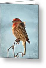 Breezy Morning Housefinch Greeting Card