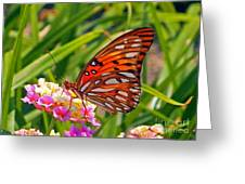 Brenda's Butterfly Greeting Card
