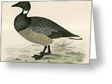 Brent Goose Greeting Card