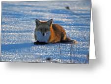 Brer Fox Greeting Card