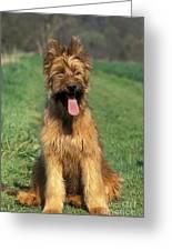 Briard Puppy Greeting Card