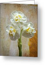 Bridal Crown Narcissus Square Greeting Card