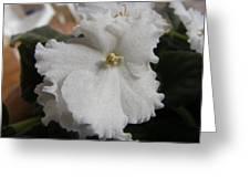 Bride's Dress Greeting Card
