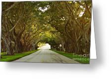 Bridge Road Banyans Greeting Card by Lynda Dawson-Youngclaus