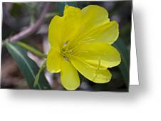Bridges Evening Primrose Greeting Card