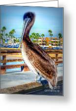 Brief Pelican Encounter  Greeting Card