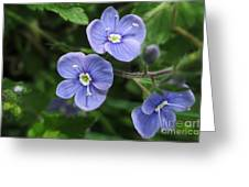 Bright And Blue Greeting Card
