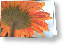 Bright And Sunny Greeting Card