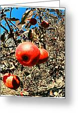Bright Apples Greeting Card