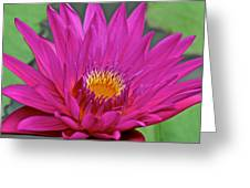Bright Beauty Greeting Card