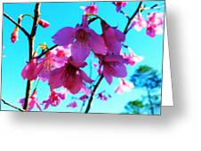 Bright Blossoms Greeting Card