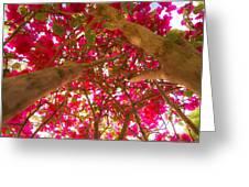 Bright Bougainvillea Greeting Card