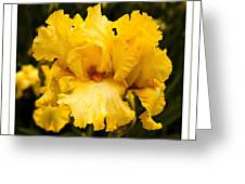 Bright Bright Spring Yellow Iris Flower Fine Art Photography Print  Greeting Card