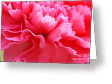 Bright Carnation Greeting Card