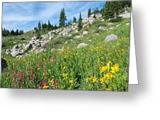 Bright Colors Of A Colorado Summer Greeting Card