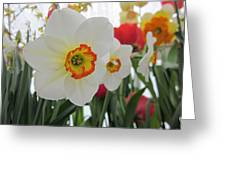 Bright Daffodils Greeting Card