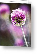 Bright Drumbstick Greeting Card