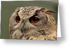 Bright Eyed Eagle Owl  Greeting Card