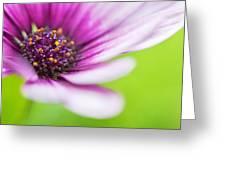 Bright Floral Display Greeting Card