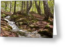 Bright Forest Creek Greeting Card