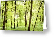Bright Green Forest In Spring With Beautiful Soft Light  Greeting Card