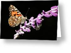 Painted Lady Butterfly On Purple Flower Greeting Card