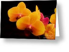 Bright Orchids Greeting Card