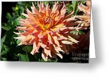 Bright Peachy Star Greeting Card