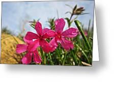 Bright Phlox Blooms Greeting Card