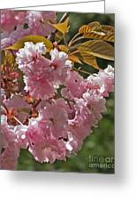 Bright Pink Apple Tree Flowers Greeting Card