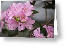 Bright Pink Azalea Greeting Card