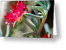 Bright Pink Flower Greeting Card