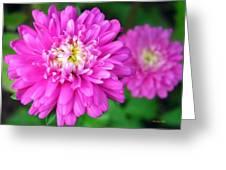 Bright Pink Zinnia Flowers Greeting Card