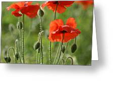 Bright Poppies 1 Greeting Card