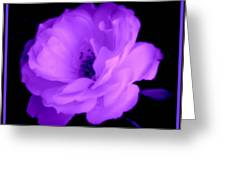 Bright Purple Perfection Greeting Card