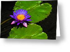 Bright Purple Water Lilly Greeting Card