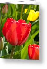 Bright Red Tulip Greeting Card