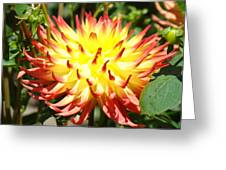Bright Red Yellow Dahlia Flower Art Print Greeting Card