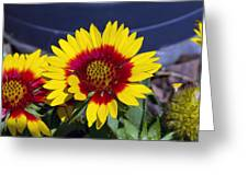Bright Summer Flower  Greeting Card