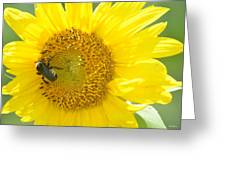 Bright Sunflower 2013 Greeting Card