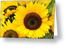 Bright Sunflower Blossoms Greeting Card