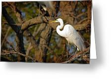 Bright White Heron Greeting Card