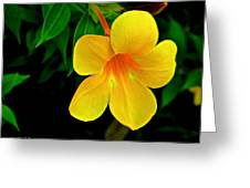Bright Yellow Flower Greeting Card